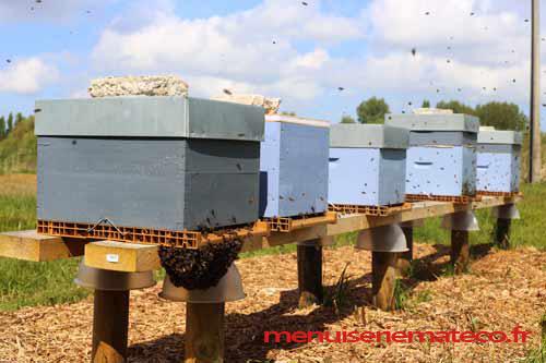 les ruches mateco